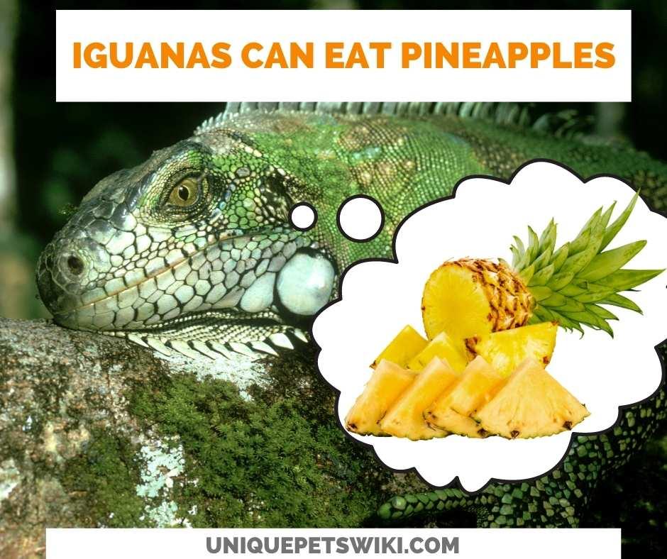 Can Iguanas Eat Pineapple?
