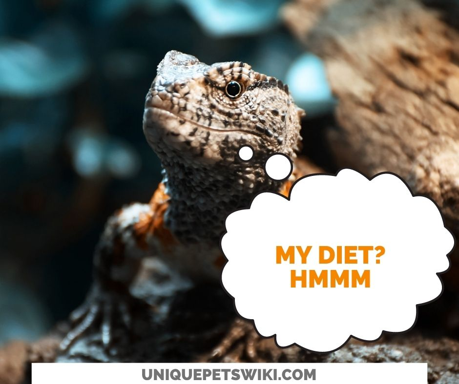 Diet - What Should I Feed My Chinese Crocodile Lizard?