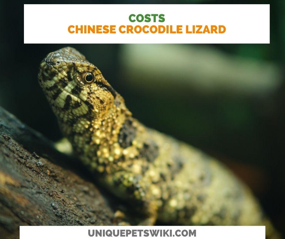 Chinese Crocodile Lizard Costs