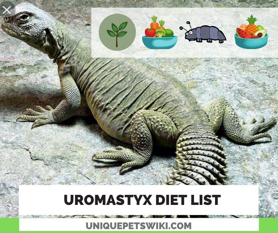 Uromastyx Diet List