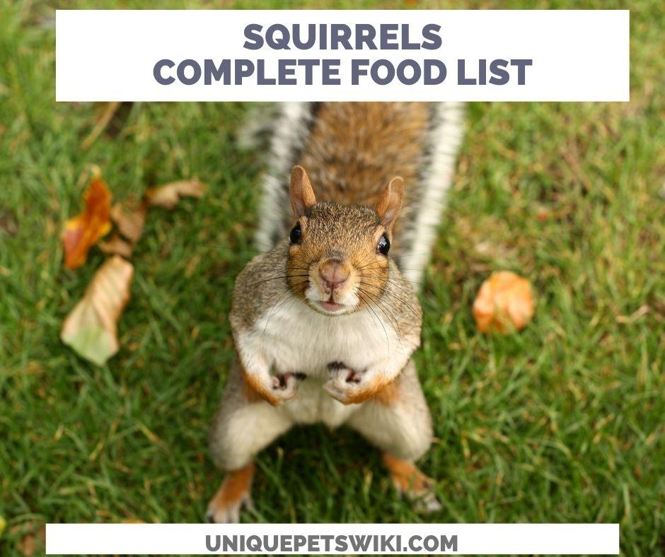 Complete squirrels food lis