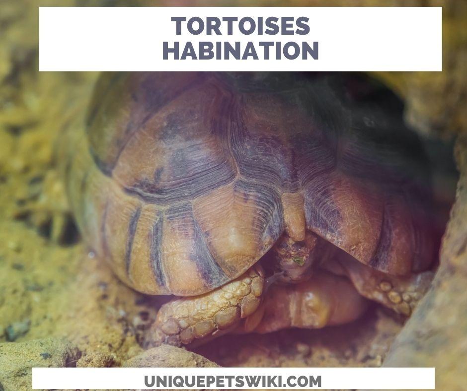 Tortoises will hibernate during winter