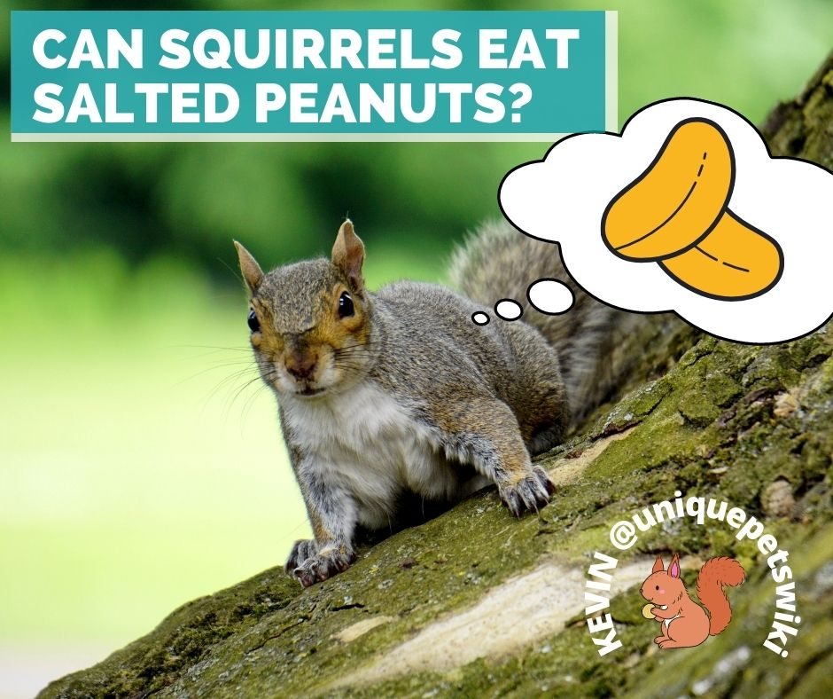 Can Squirrels Eat Salted Peanuts?