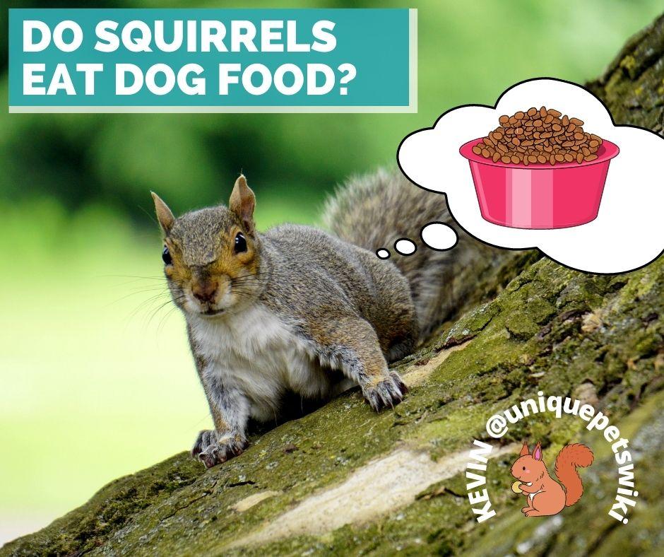 do squirrels eat dog food?