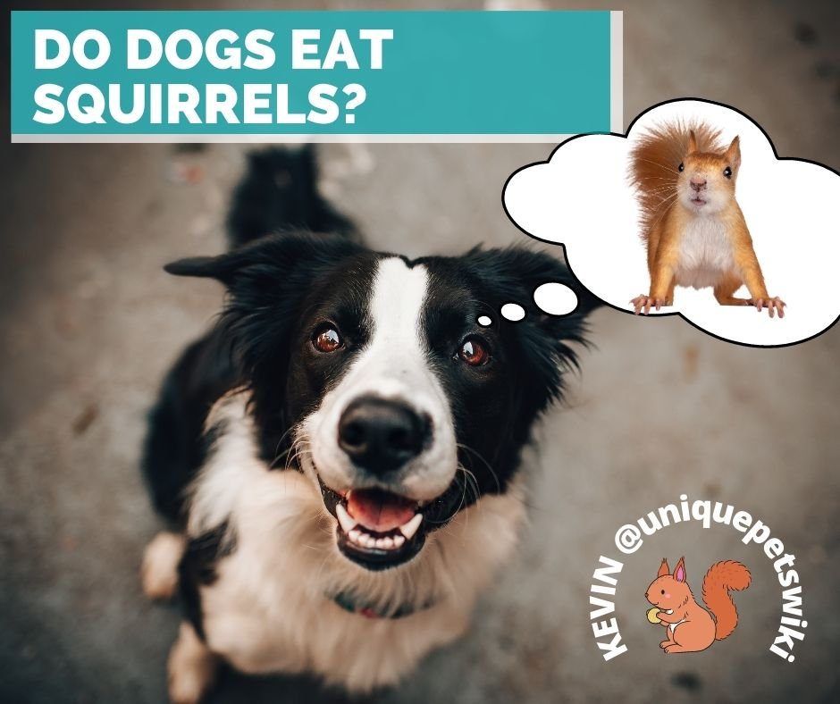 Do dogs eat squirrels