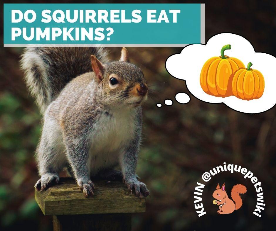 Do squirrels eat pumpkins