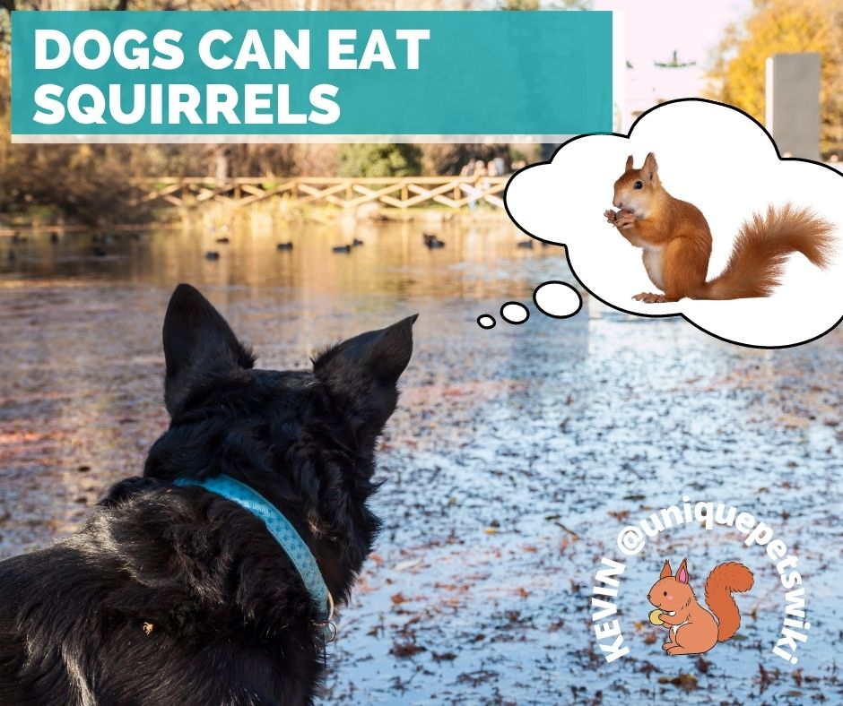 Dog can eat squirrels