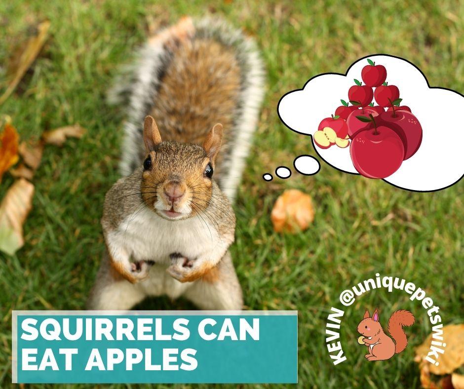 Do squirrels eat apples?