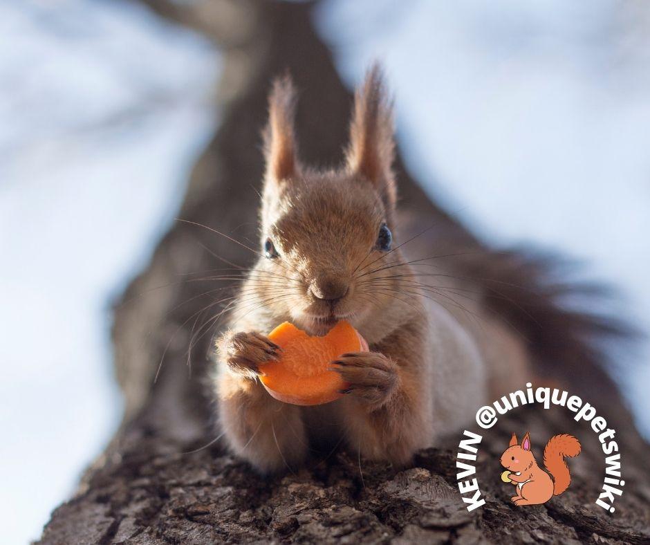 squirrels can eat carrots