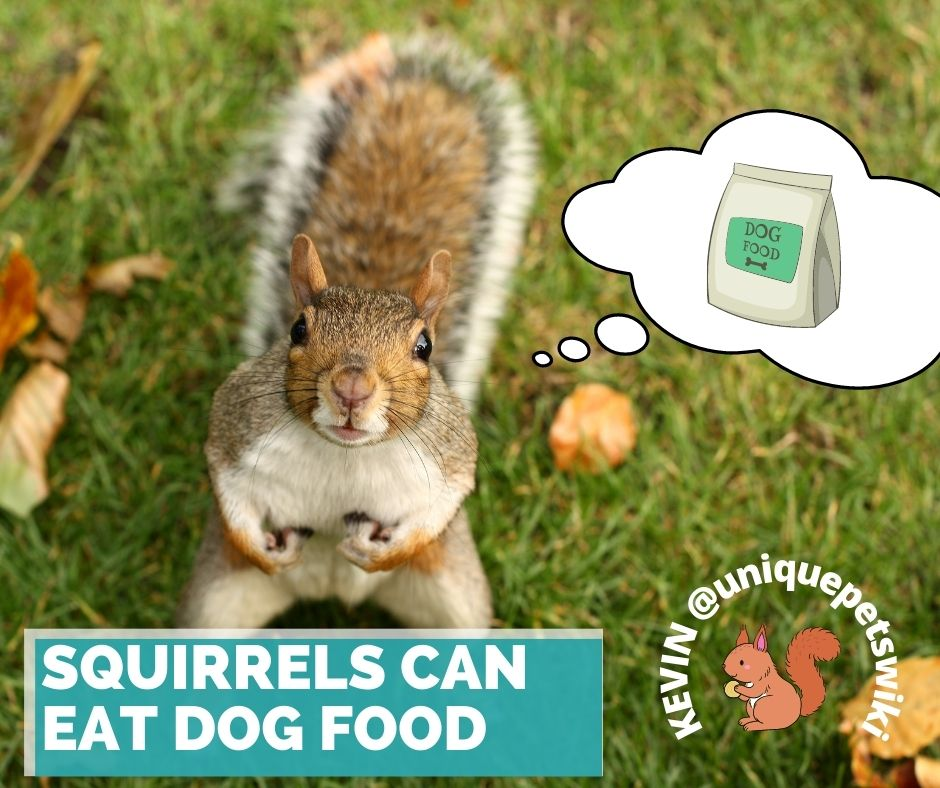 Squirrels can eat dog food
