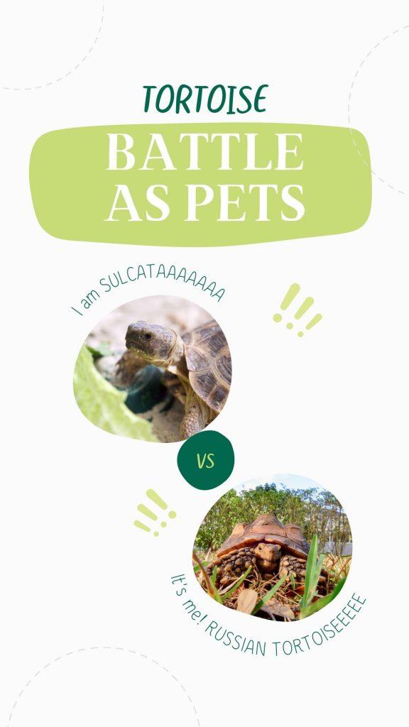 Sulcata Vs Russian Tortoise: Full Comparison