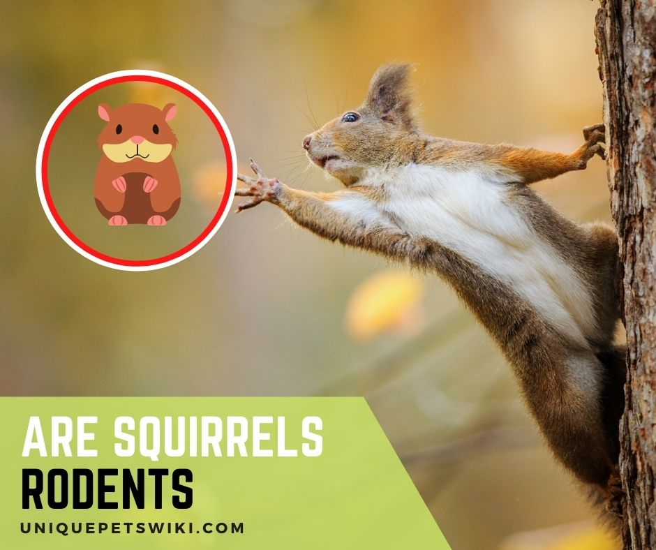 Are Squirrels Rodents