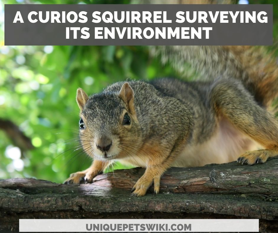 Why do squirrels stare at you?