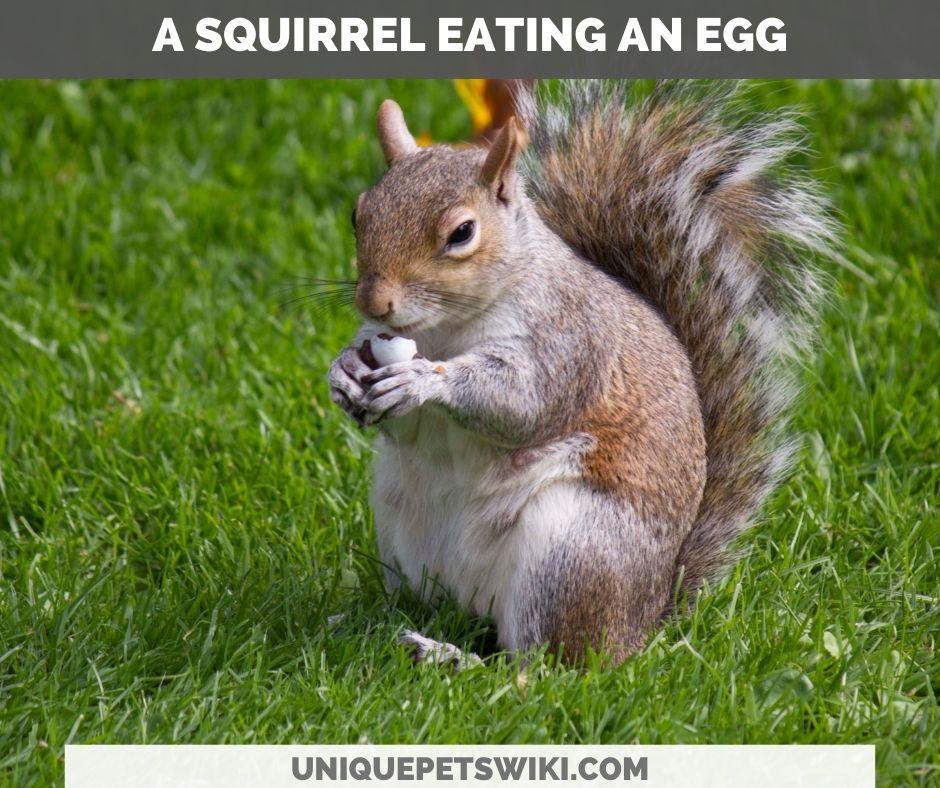 a squirrel eating an egg