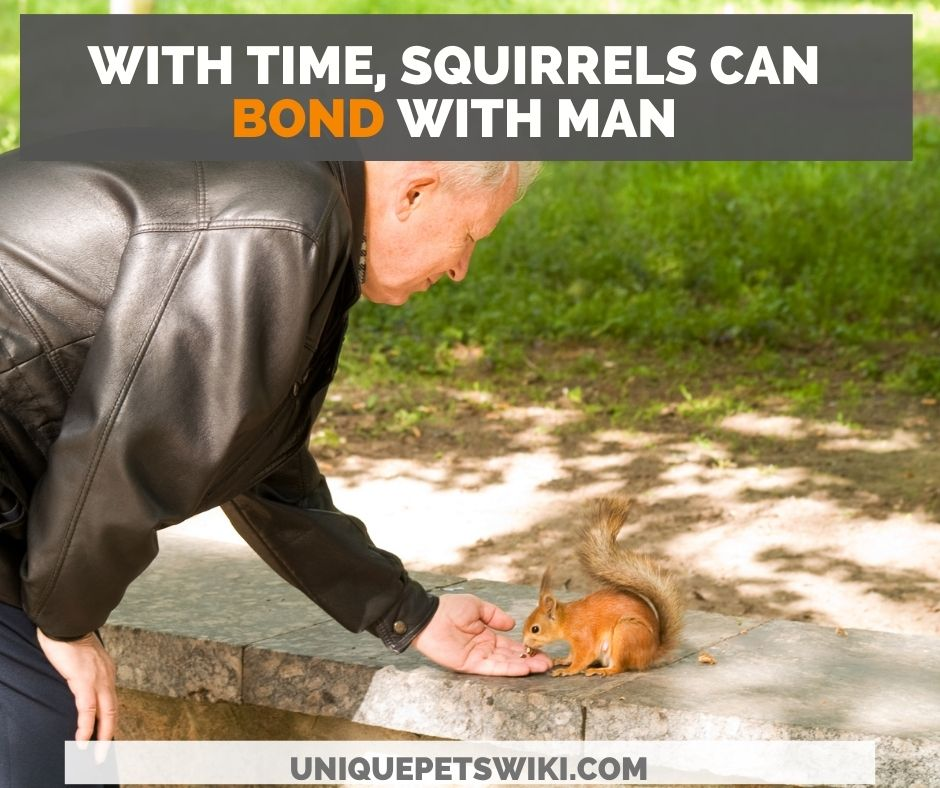 how to befriend squirrels