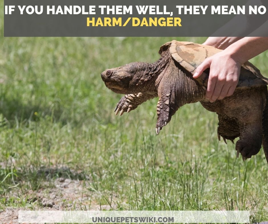 how to handle your pet snapping turtle to avoid a bite
