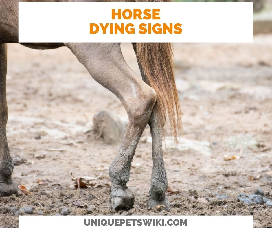 13 Signs Of A Dying Horse