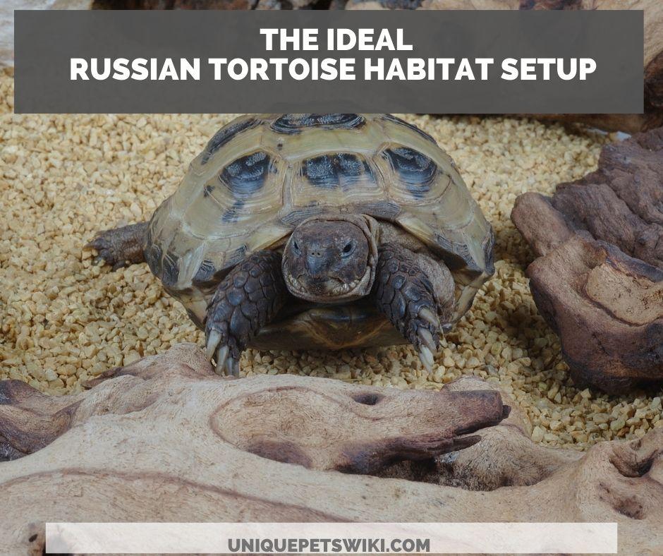 the ideal russian tortoise habitat setup