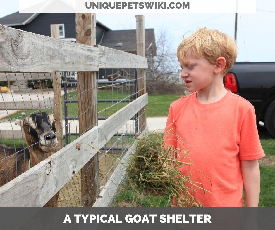 an ideal goat enclosure