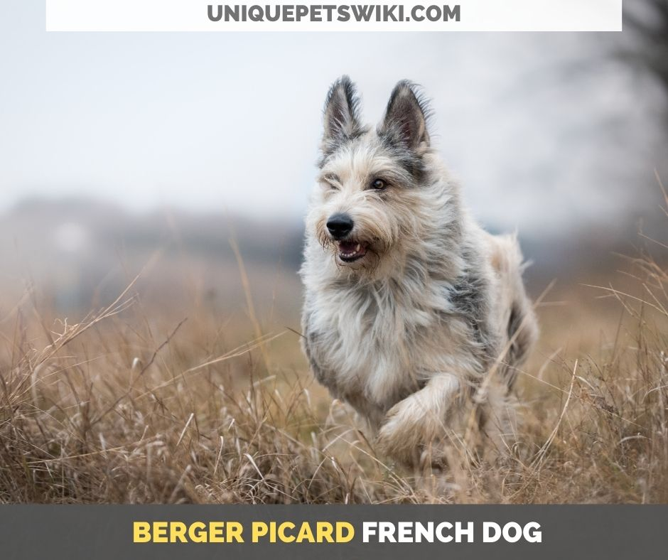 Berger Picard