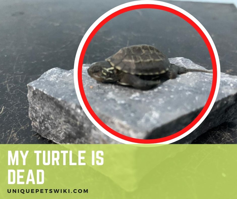 Signs A Turtle Is Dying