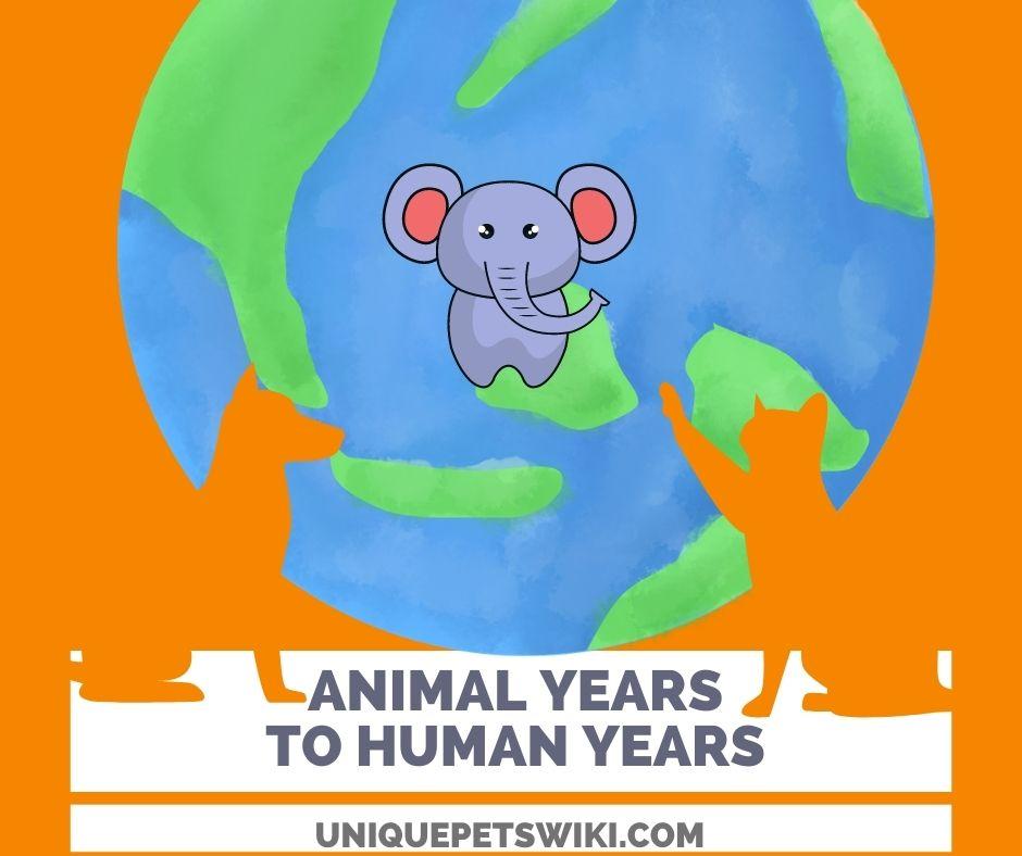 Animal Years To Human Years