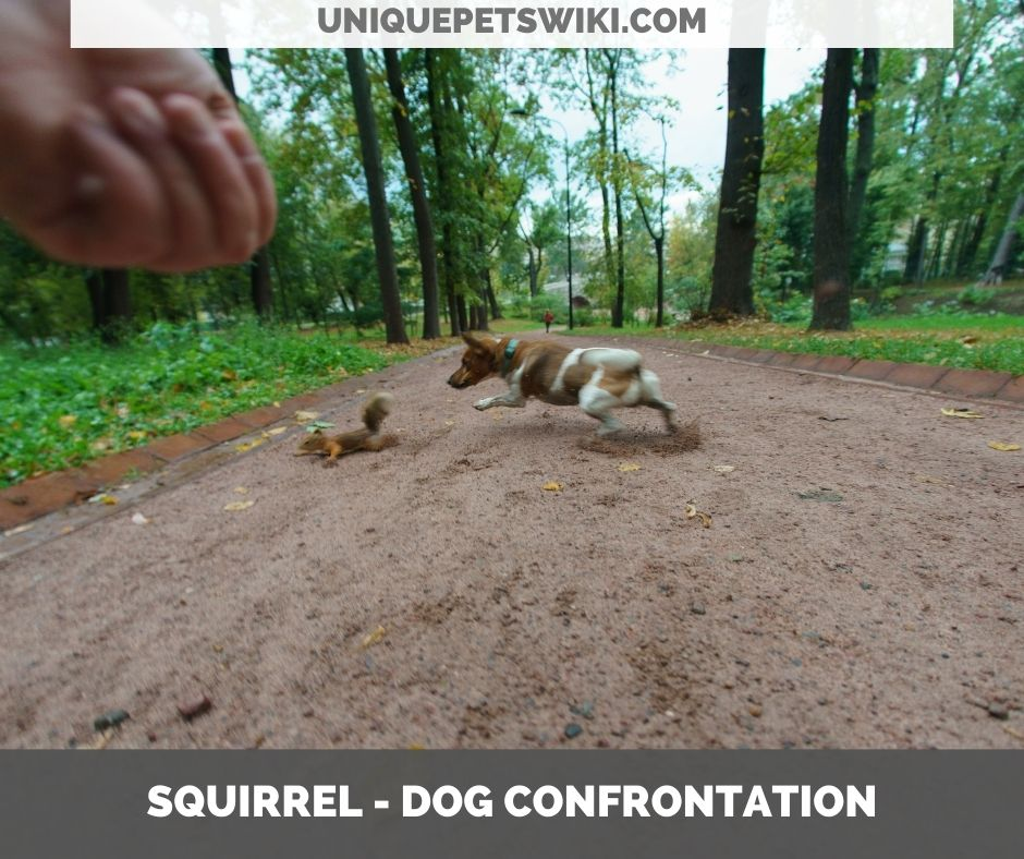 do squirrels attack dogs