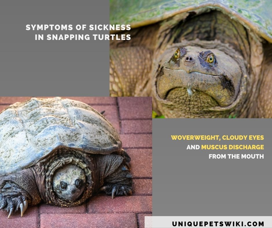 symptoms of ill health in pet snapping turtle.