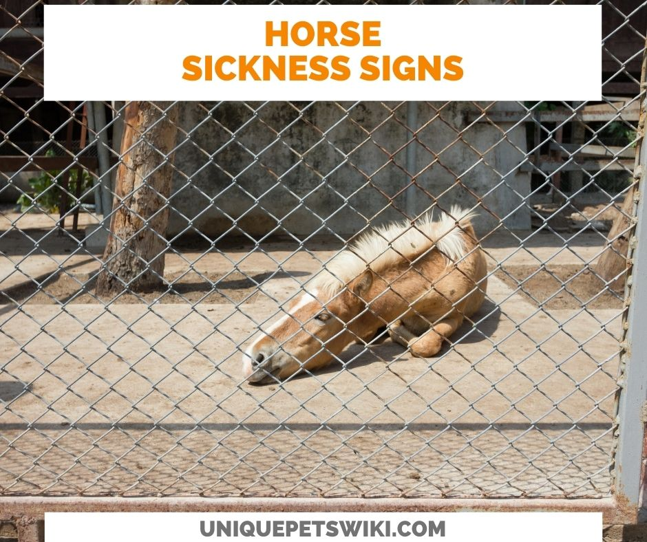 Signs Of A Sick Horse