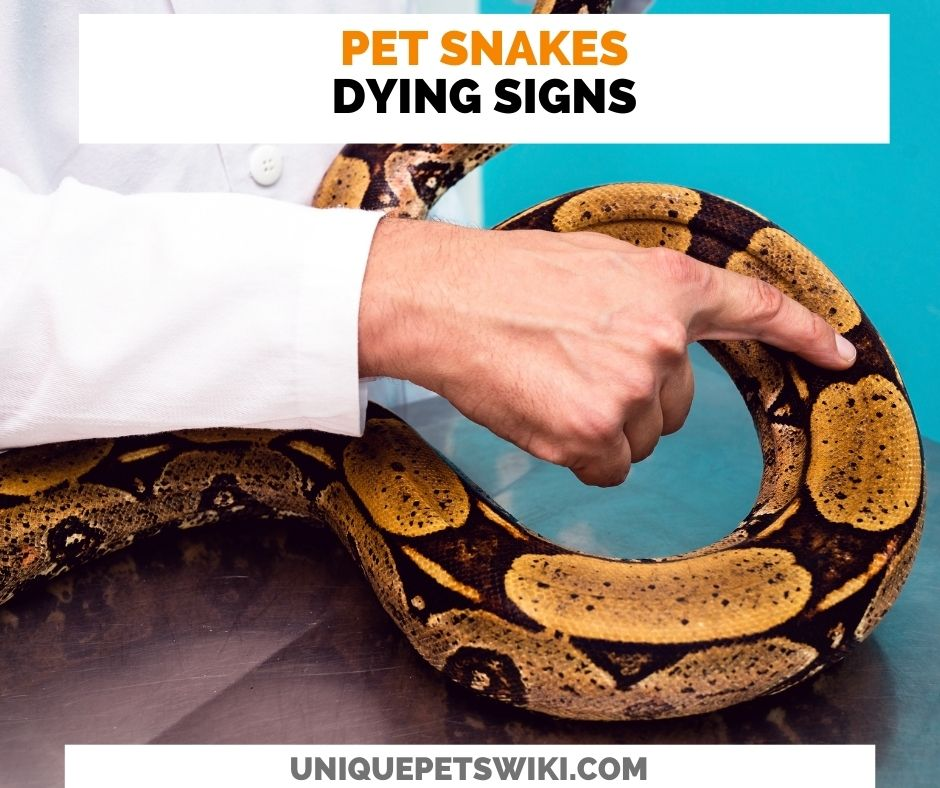 08 Pet Snake Dying Signs
