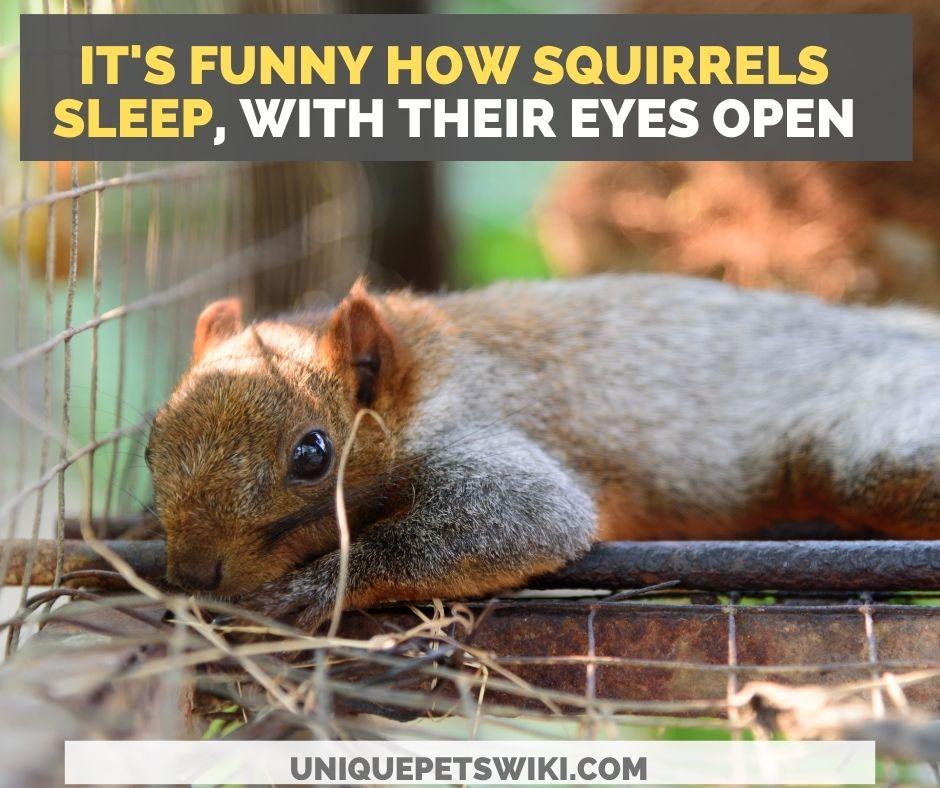 A sleeping Squirrel