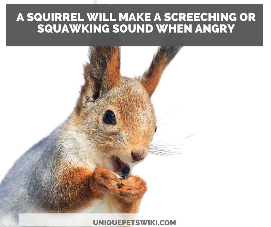 do squirrel bark