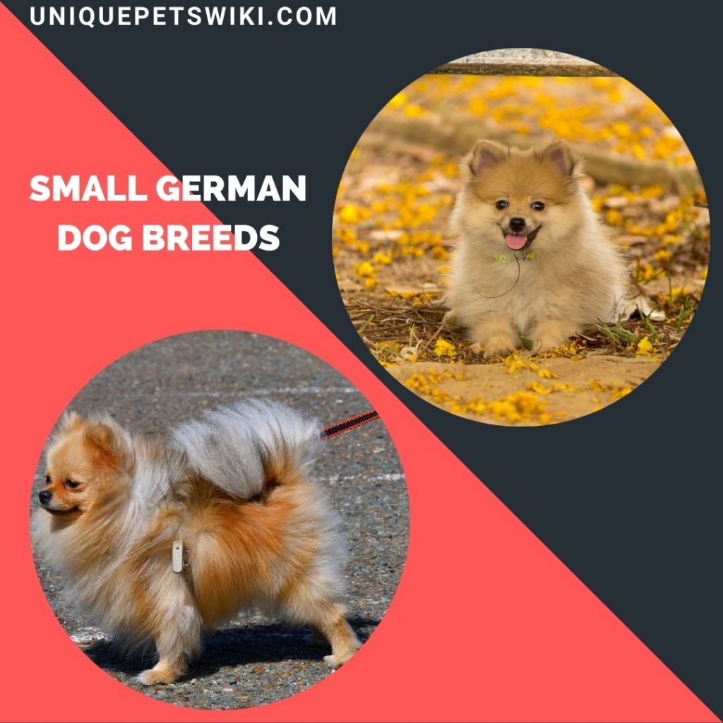 small German dogs