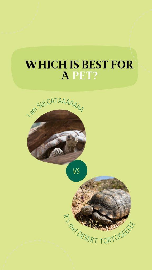 Sulcata vs. Desert Tortoise: differences explained