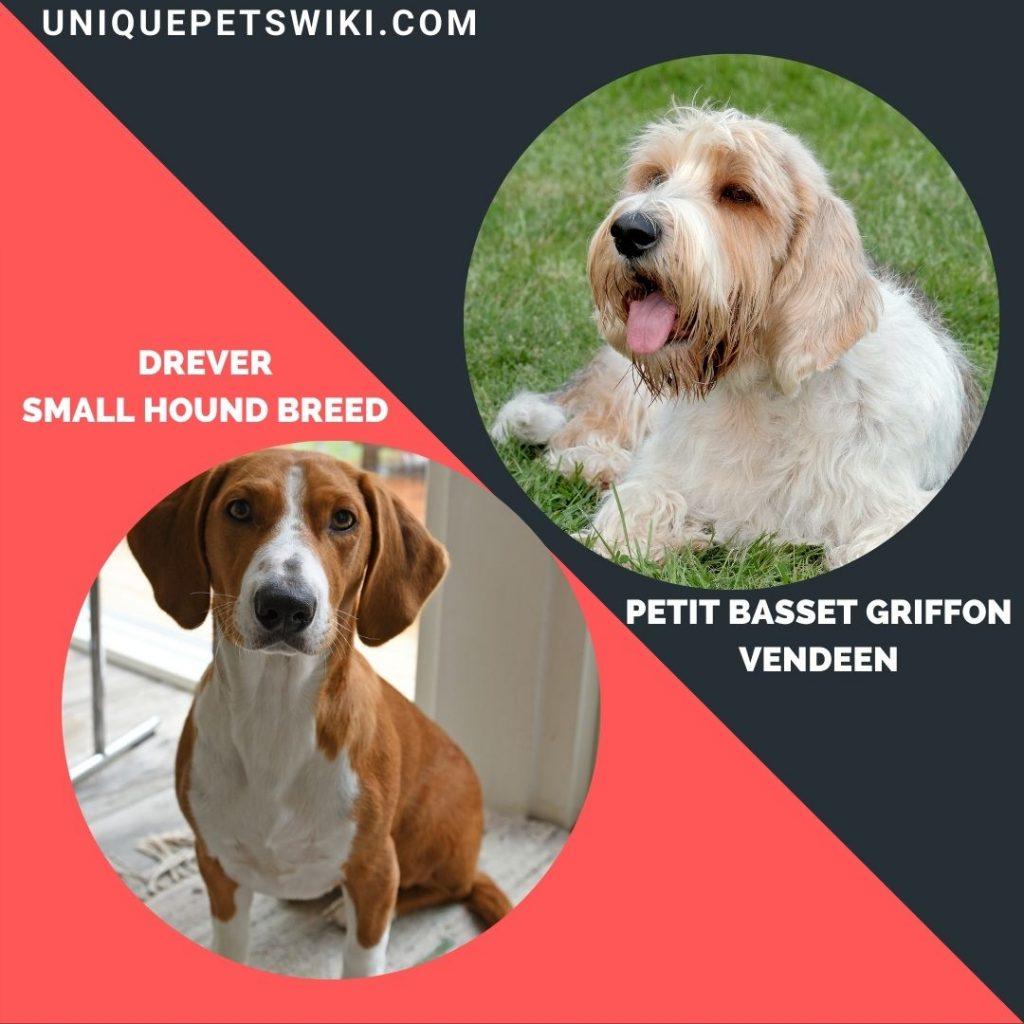 Petit Basset Griffon Vendeen and Drever small hound breeds