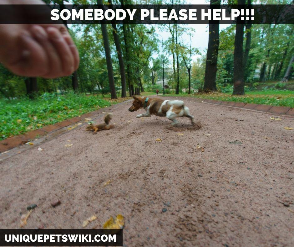 A dog pursuing a squirrel