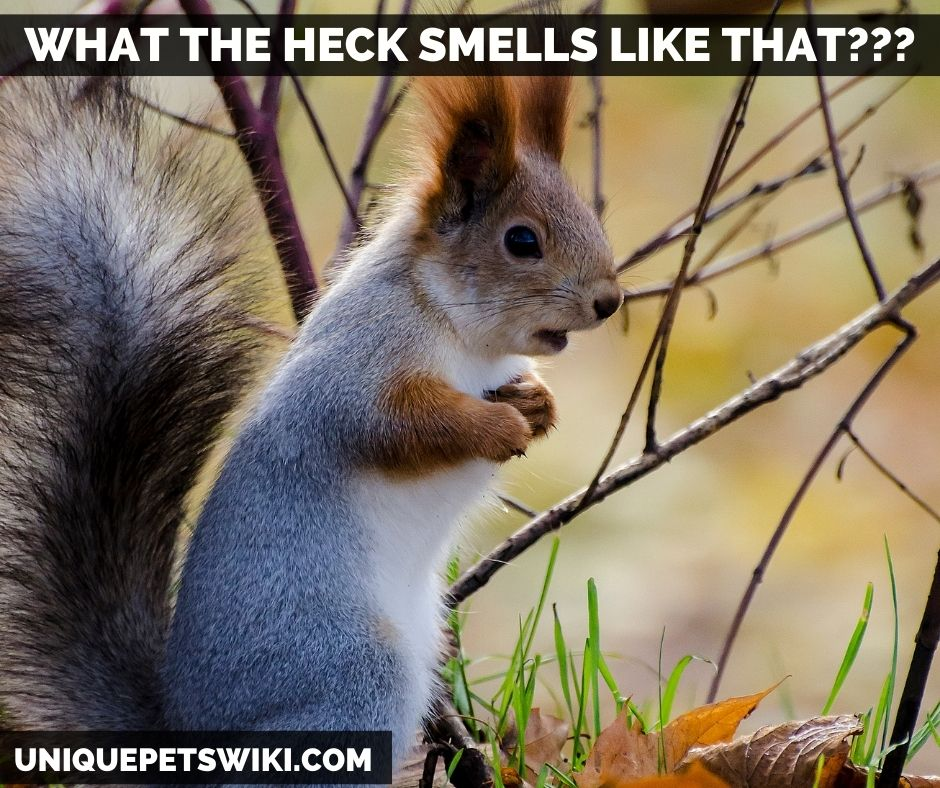what smell do squirrels hate