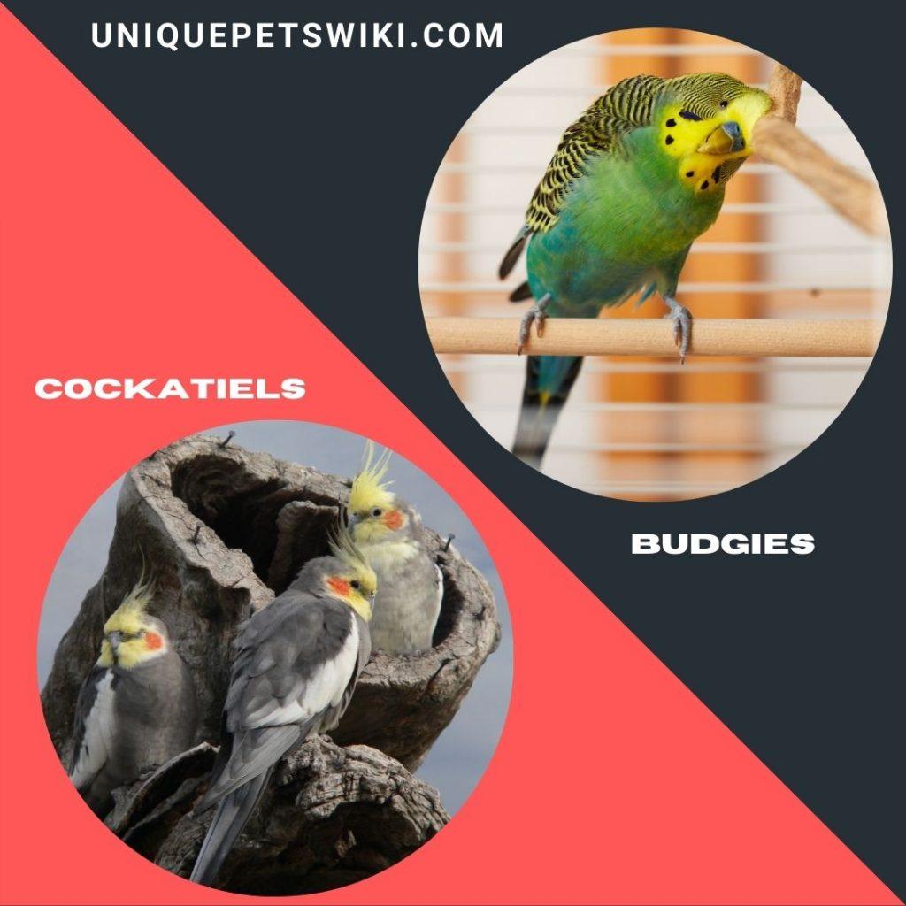 Best Beginner Friendly Pet Birds