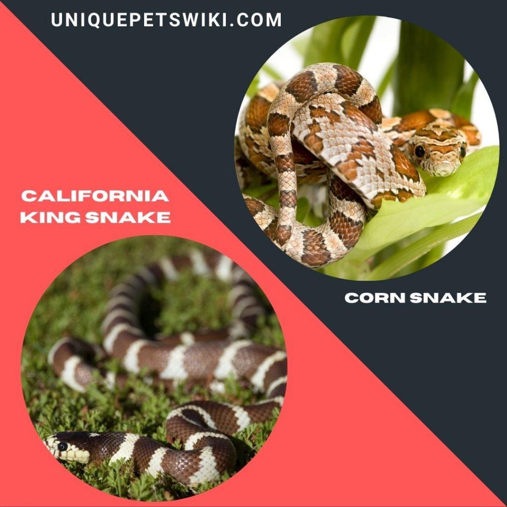 Best Beginner Friendly Pet Snakes