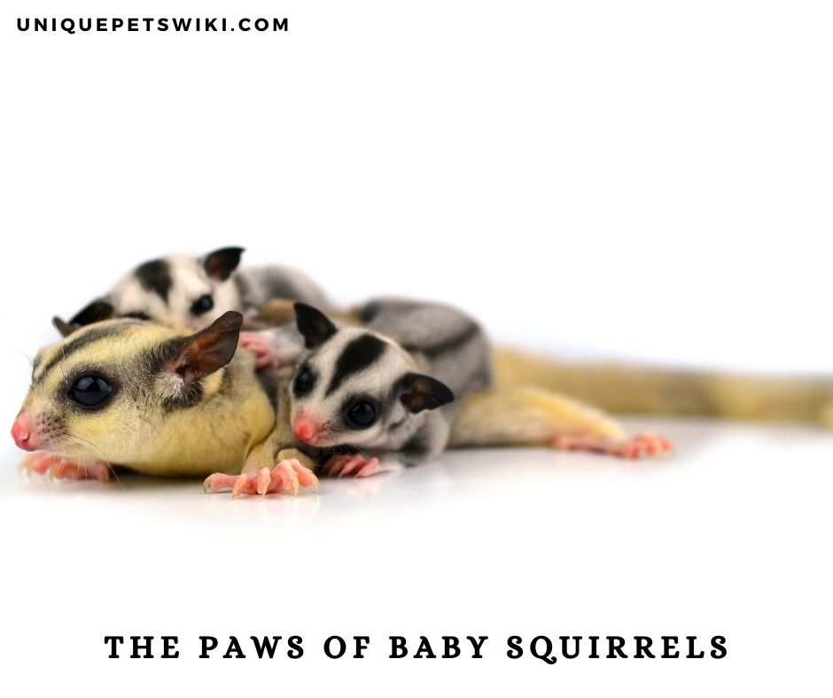 the paws of baby squirrels