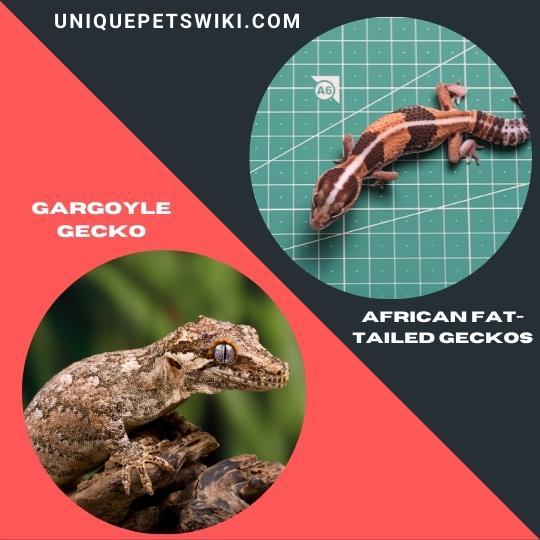 Gargoyle Gecko and African Fat-Tailed Geckos