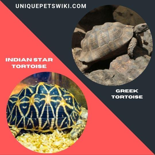 Best Beginner Pet Tortoises